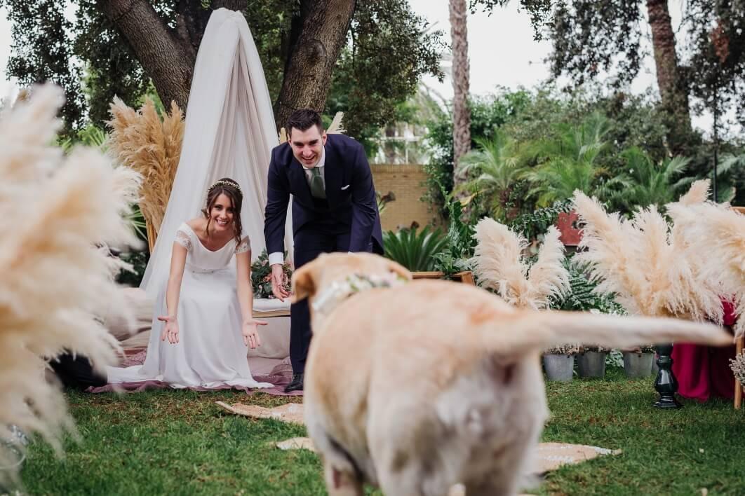 perro en la boda Alicante